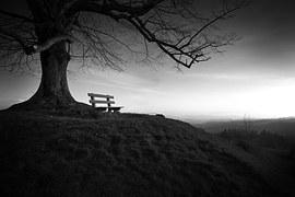 tree-753069__1801
