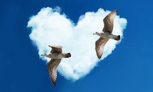 gulls-1370979__180