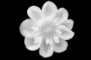 flower-219963__340