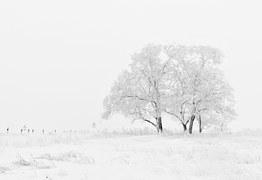 winter-20234__180