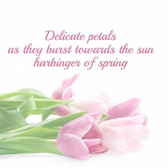 seasonal-spring-haiku-tulip3-1-605552a93b703