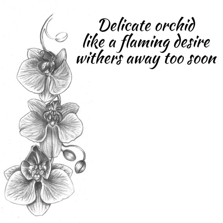 haiku-orchid